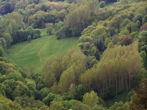 Bosque de O Caurel (foto Zentolo)