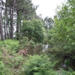 10_Parque_Natural_de_Carreirón_g