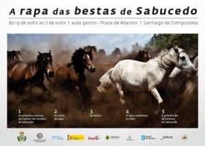 rapa das bestas sabucedo 2014