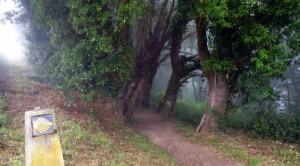 camino-frances-300x166