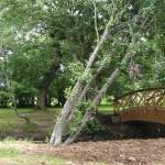 Bosque Anllons, Carballo : Costa da morte