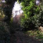 Camino_en_Coto_de_A.Ramil