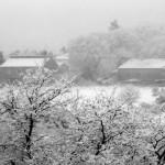 Milleiros nevado