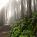 El Kumano Kodo en bosque profundo