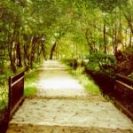 Camino con naturaleza verde