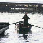 Pescador en Ría de Arousa