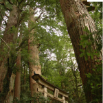 Una puerta sintoísta con los árboles milenarios en el Kumano Kodo