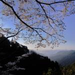Llegada de primavera al Kumano