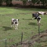 a pastoriza 156