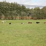a pastoriza 157