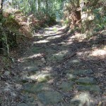 camiño medieval hpim0227_1013x768