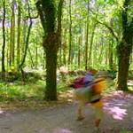 carballeira de san anton, camino de santiago - O Pino
