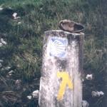 flecha del camino de santiago