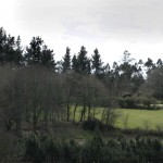 negreira campo