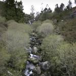 negreira rio 2