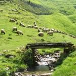 ovejas y prados de saint pied de port