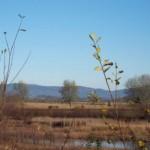 paisaxe_vista_desde_a_lagoa