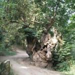 triacastela Camino de Santiago por Sarria