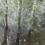 vimianzo rio 45